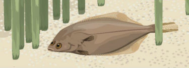 a fish on the river bed amongst reeds