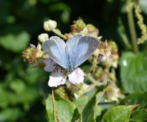Powder Blue - Hazel Morrell