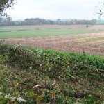 hedgelaying9[1]